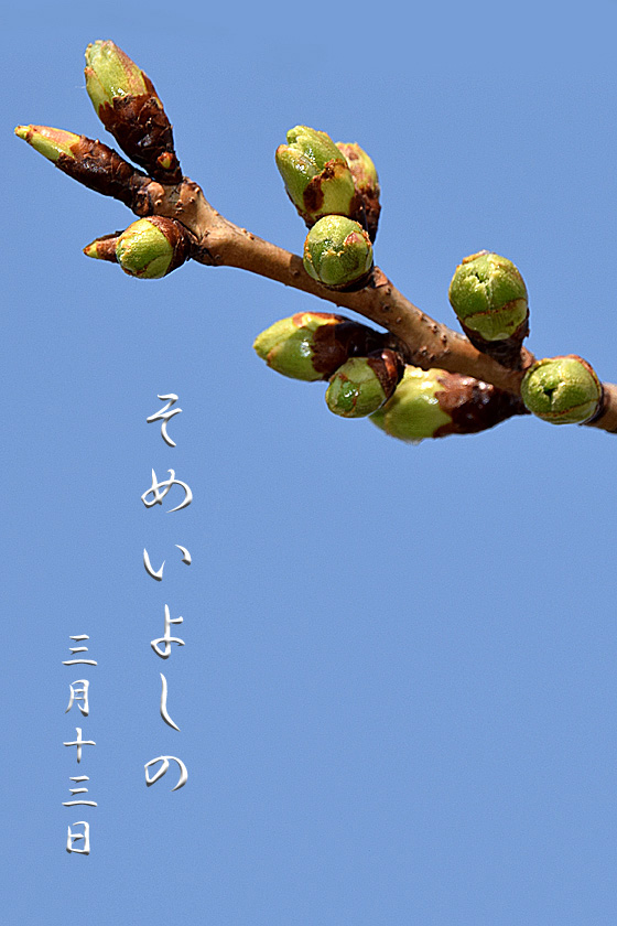 DSC_9296のコピー.jpg